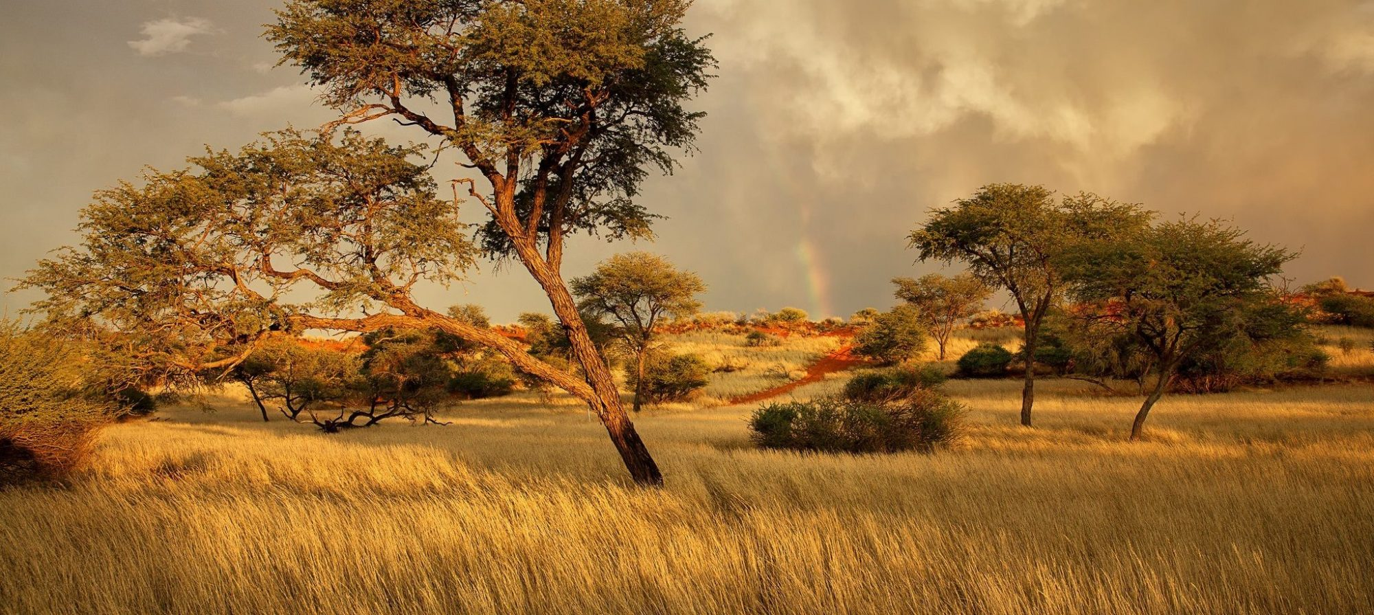 Jeremy Griffith Page African landscape